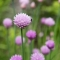 Blommor-graslok