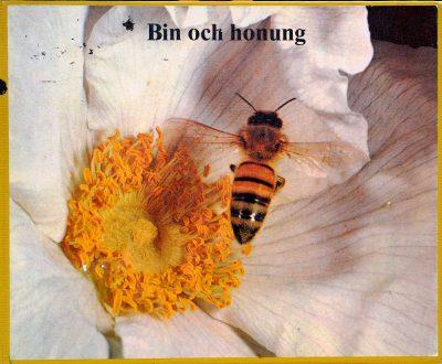 Bin-och-honung
